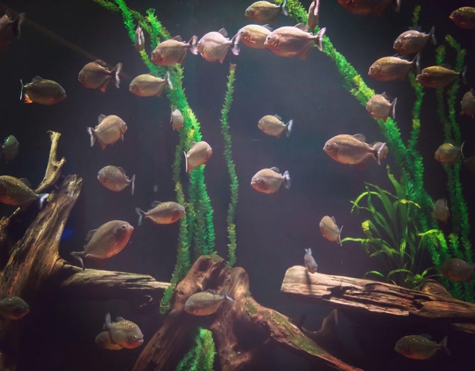 entretien d'aquarium à Nice